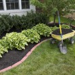 Foto de Stock  : Mulching around Bushes