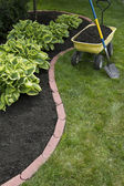 Mulching Around Hostas — Foto de Stock