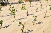 Reforestación — Foto de Stock