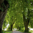 Beautiful Avenue — Stock Photo