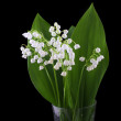 Lily of the valley isolated on black — Stock Photo #10807069