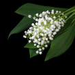 Lily of the valley isolated on black — Stock Photo #10807080