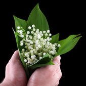 Hand holding a lily of the valley isolated on the black — Stock Photo