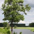 Lonely tree on the bank of the river — Stock Photo #11364597