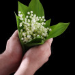Stock Photo: Hand holding a lily of the valley isolated on the black
