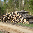 A pile of logs in the forest near road - Stock Photo