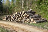 A pile of logs in the forest near road — Stock Photo