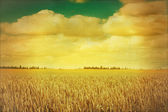 Sky and cereals field in retro style — Stock Photo