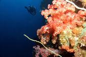 Coral Wall — Stock Photo