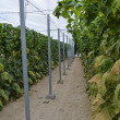 Almeria greenhouse cucumber plantation — Stock Photo #11328971
