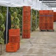 Almeria greenhouse cucumber plantation — Stock Photo #11335558