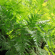 Stock Photo: Green Nature