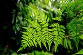 Yeşil doğa — Stok fotoğraf