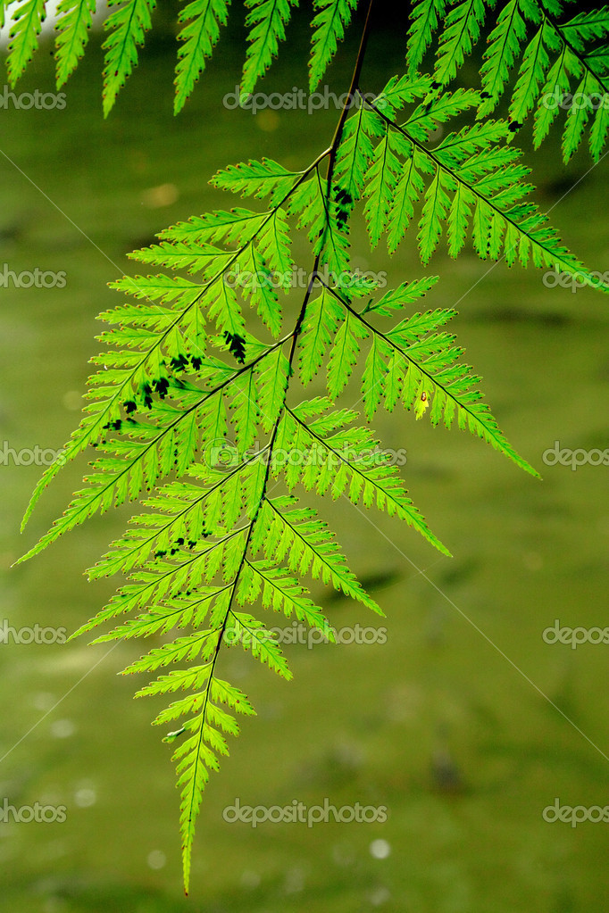 Tropical forest in green nature and water , Thailand. — Stock Photo #12012761