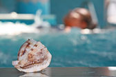 Shell in the Spa — Stock Photo