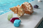 Shell and stones — Stock Photo