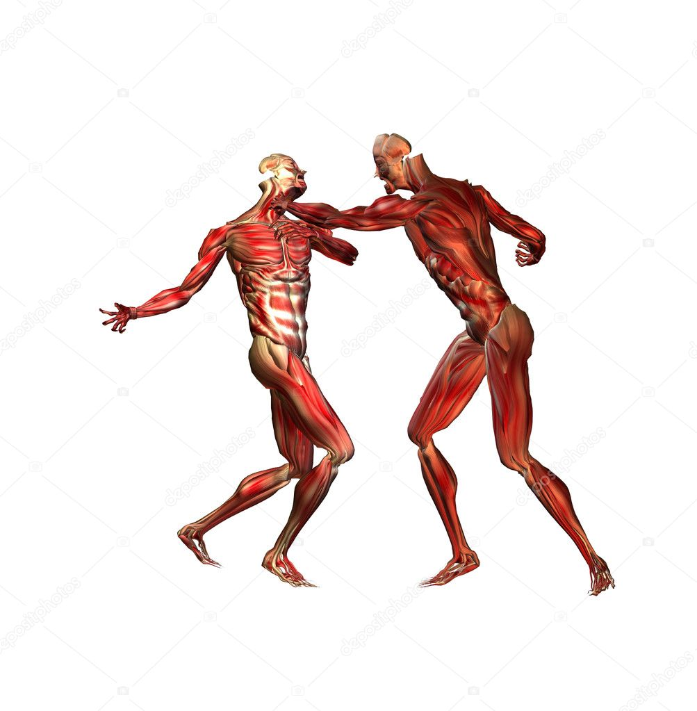 Anatomy — Stock Photo #10930537