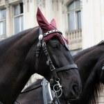 Horse — Stock Photo #10735875