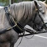 Horse — Stock Photo #10735947