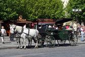 Horse coach — Stock Photo