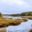 Forest pond in autumn — Stock Photo