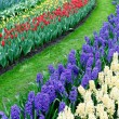 Stock Photo: Tulips and hyacinth