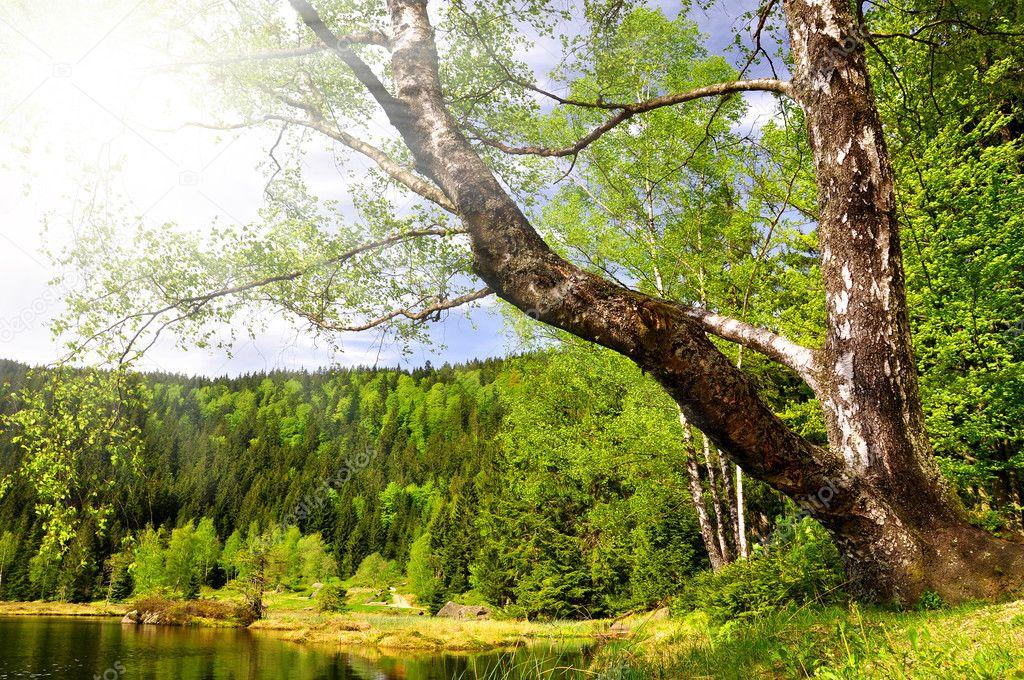 Фотообои Small Arber Lake - Germany