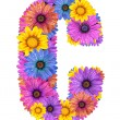 Stock Photo: Alphabet from colorful dewy flowers