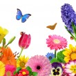 Floral background - Foto Stock