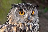 Eagle owl — Foto Stock