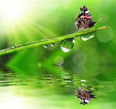 露水和蝴蝶 — 图库照片