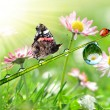 Butterfly and ladybug on grass — Stock Photo