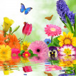 Floral background - Stockfoto