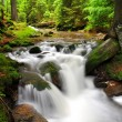 Waterfall in the spring forest — Stock Photo