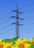 Sunflower field with power line — Stock Photo