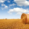Straw bales - Stock Photo