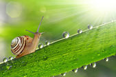 Snail on grass — Stock Photo