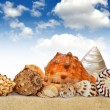 Conch shell — Stock Photo #11537470