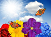 Floral background with butterfly — Foto Stock