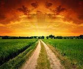 поле путь — Стоковое фото