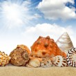 Conch shell — Stock Photo #11794202