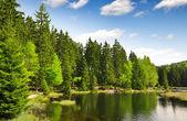 Small Arber Lake - Germany — Stock Photo