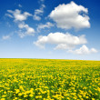 Dandelions — Stock Photo #12258929