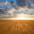 Stock Photo: Freshly sown field
