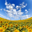 Stock Photo: Sunflower with wind turbine