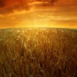 Wheat fields — Stock Photo #12387032