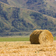 The straw bale in the field — Stock Photo