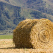 The straw bale in the field — Stock Photo #12316525