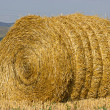 The straw bale in the field — Stock Photo #12316570