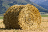 The straw roll in the field — Stock Photo